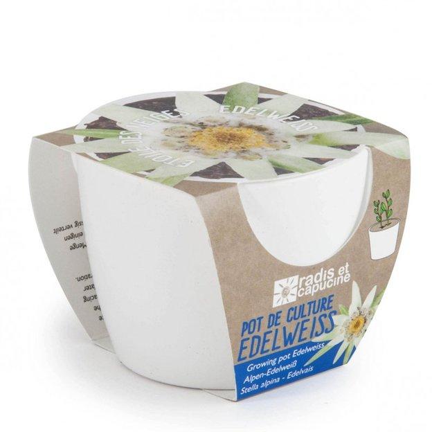 Mini Edelweiss Kit
