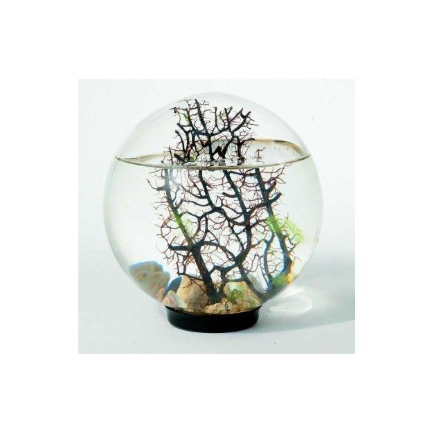 WG5 Beachworld Gorgonia 12.5 cm