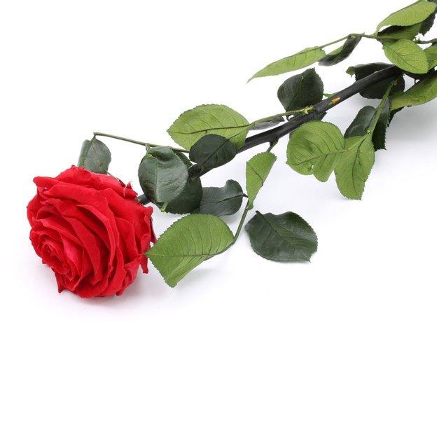 Rose à vie - rouge