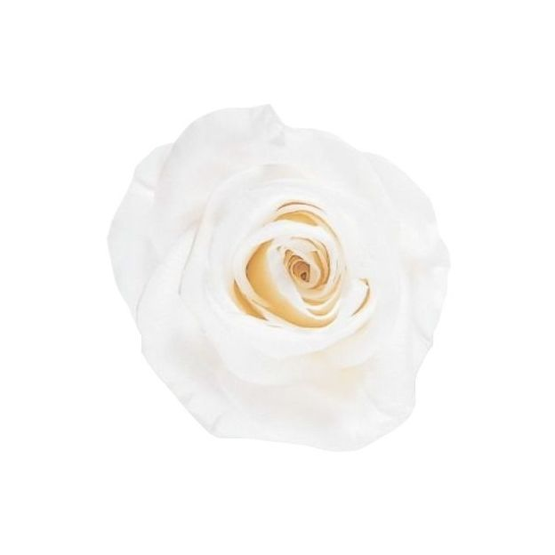 Rose à vie Deluxe blanche