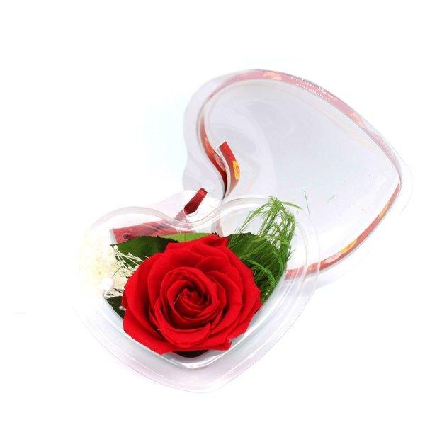 Ewig blühende Rose in Herzbox rot