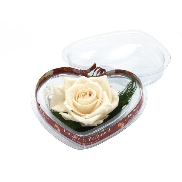 Ewig blühende Rose in Herzbox weiss