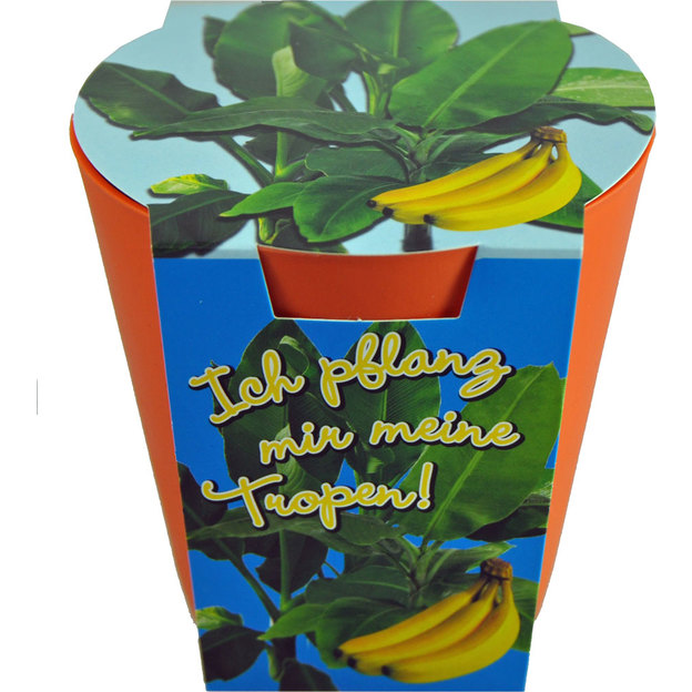 Bananier maison