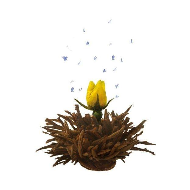 Boîte fleurs de thé Erblüh Printemps, 6x