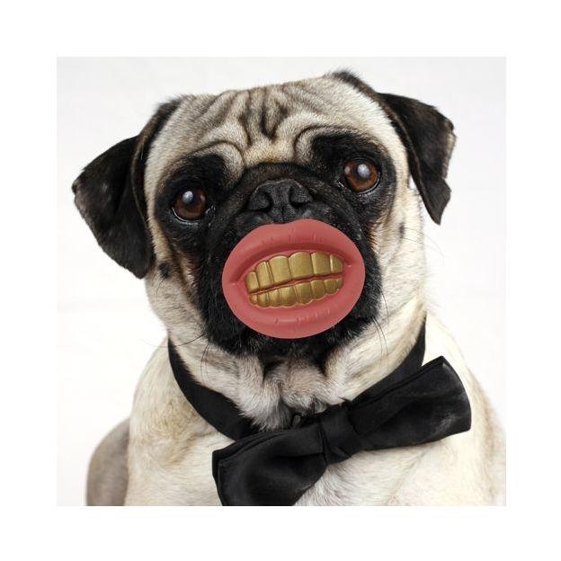 Joujou dentier pour chien