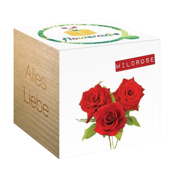 FlowerCube Pflanze Alles Liebe Wildrose