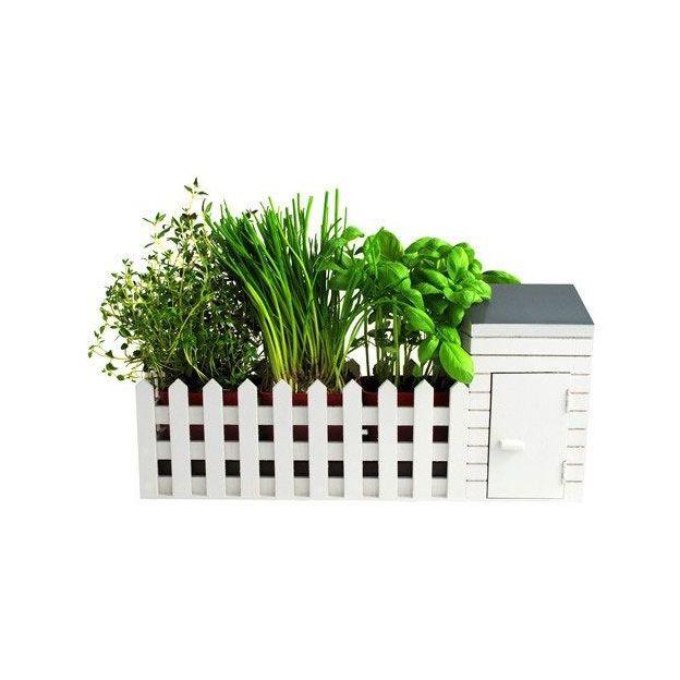 Jardin miniature Herbes aromatiques
