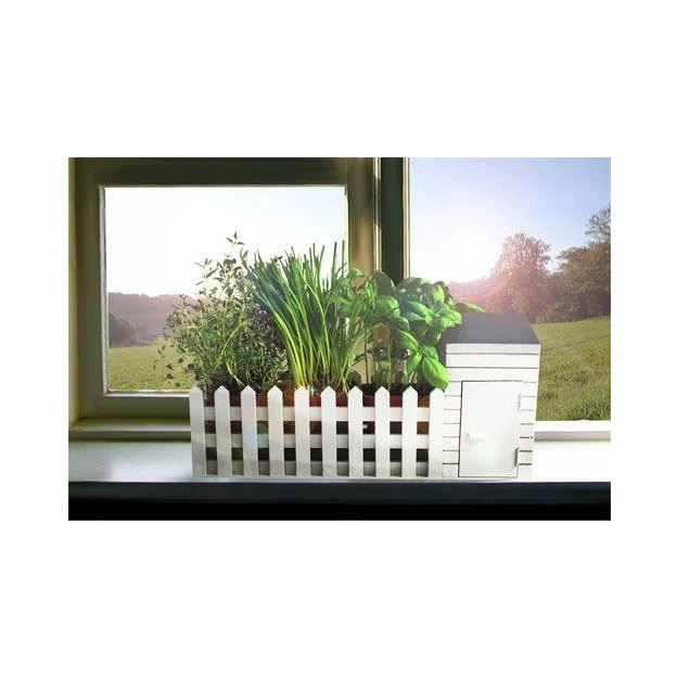 Herbes aromatiques dans Jardin miniature