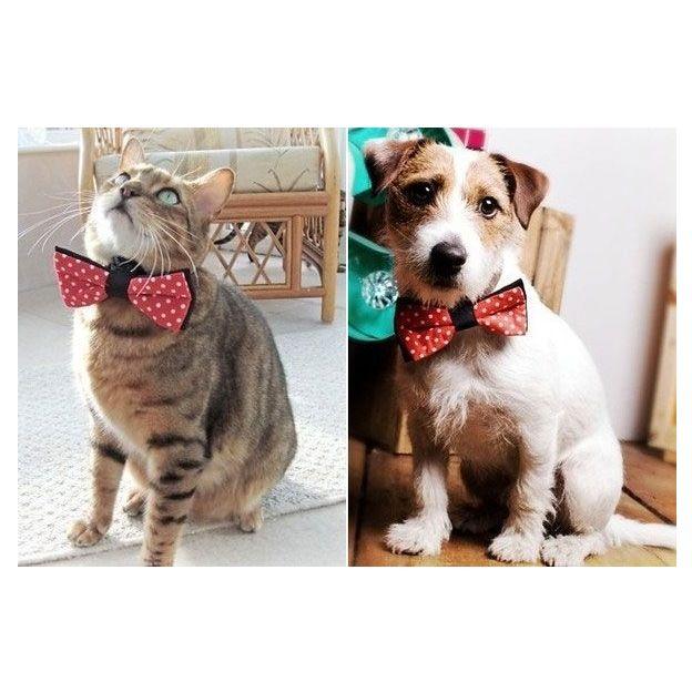 Fliege für Hund und Katze