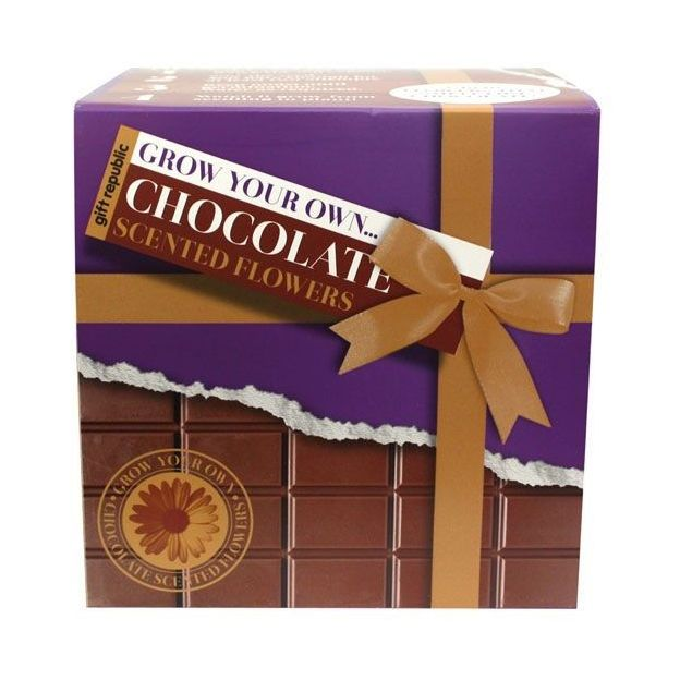 Fleurs au parfum Chocolat Kit Grow your Own