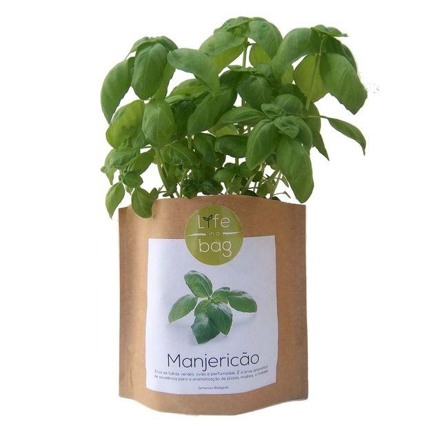 Kit plantation - Grow Bag basilic