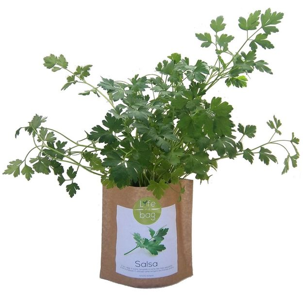 Grow Bag Petersilie