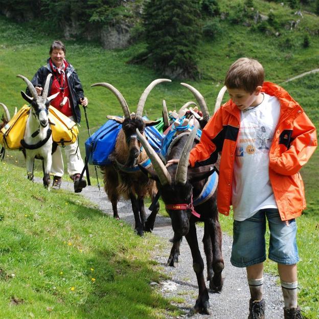 Trekking avec Chèvres de randonnée 1/2 journée (2 pers)