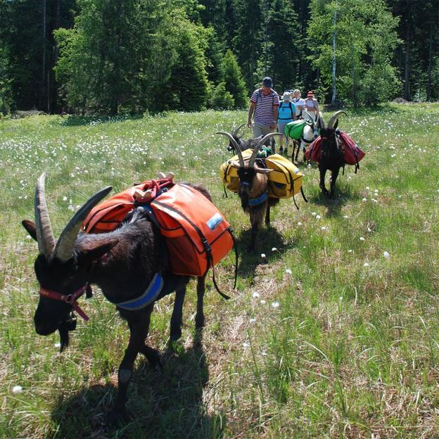 Halbtages Packgeissen Trekking für 2 Personen