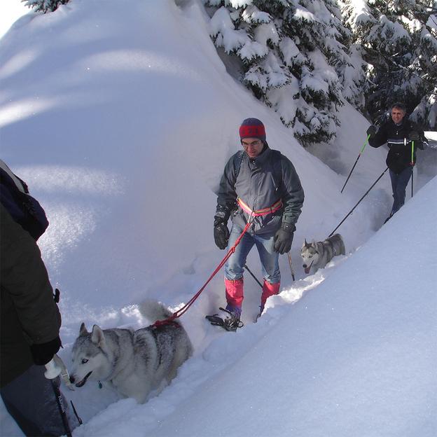 Randonnée en raquettes à neige et accompagnement husky