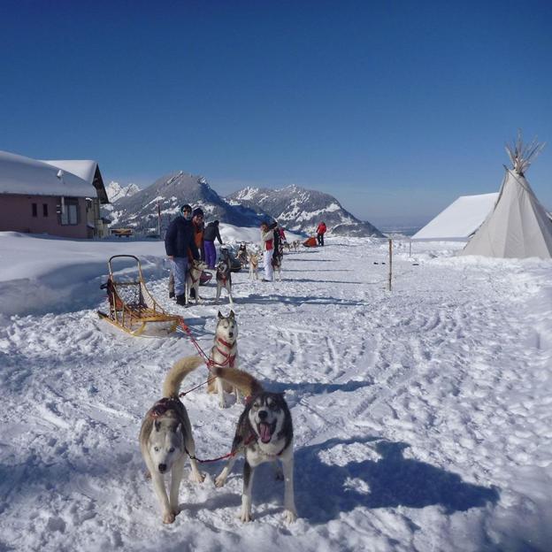 Husky - Schlittenhunde Tageskurs für 1 Person