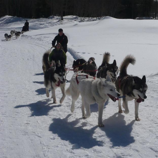 Husky tour en Valais  (1 pers.)