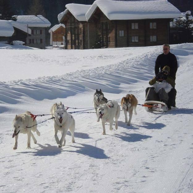 Husky Abenteuer (1 Person) im Wallis