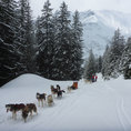 Exklusiv Schlittenhunde Abenteuer für 2 Personen