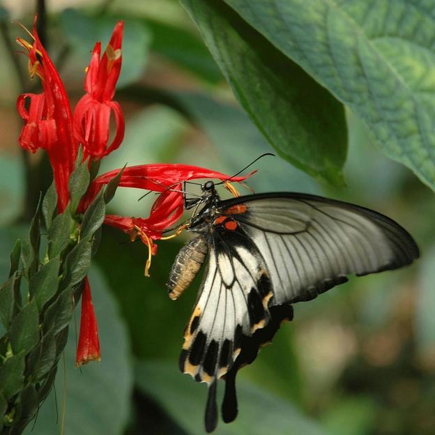 Excursion tropicale au Papiliorama / Nocturama