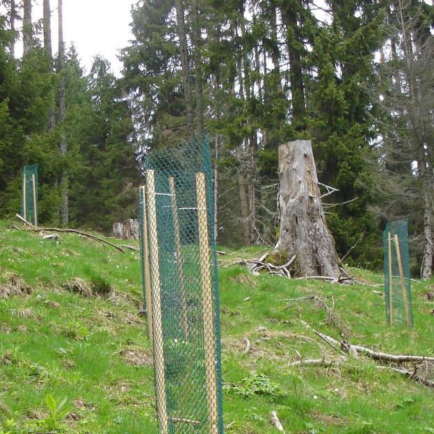 Einzigartiges Naturerlebnis mit Übernachtung in Freiburg (für 1 Person)