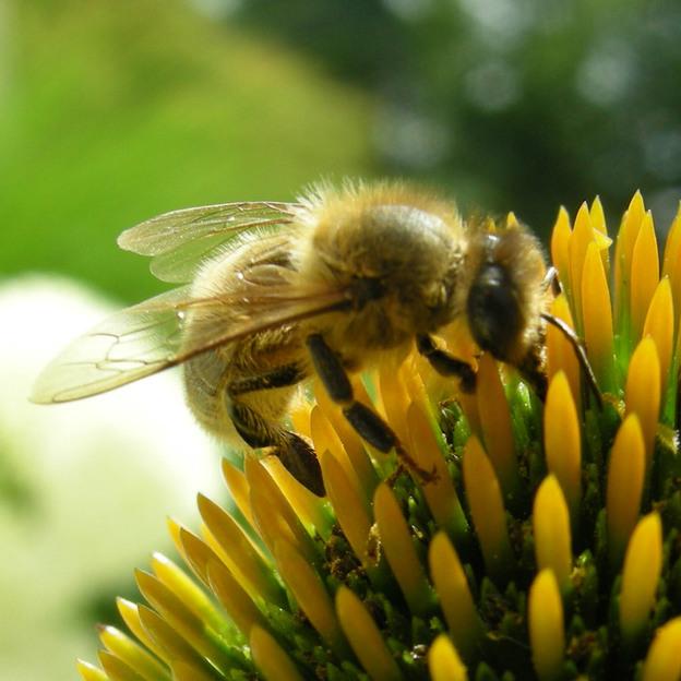 Bienenstock-Patenschaft im Kanton St. Gallen