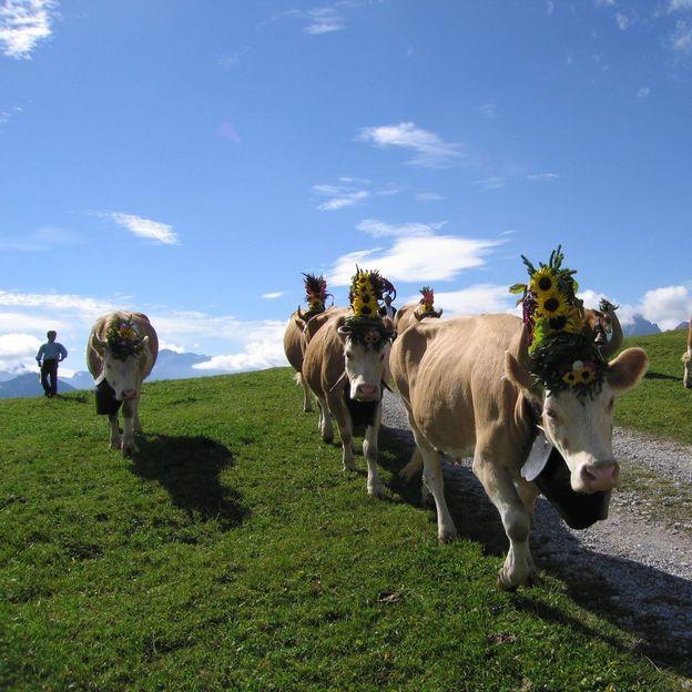 Kuhpatenschaft für 1 Sommermonat
