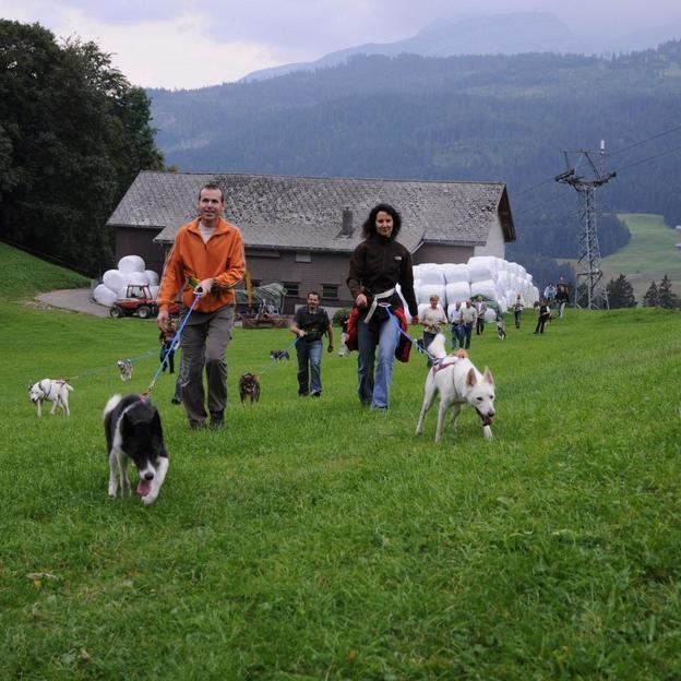 Husky-Trekking im Sommer