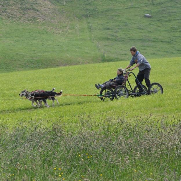 Wagentraining mit Huskies