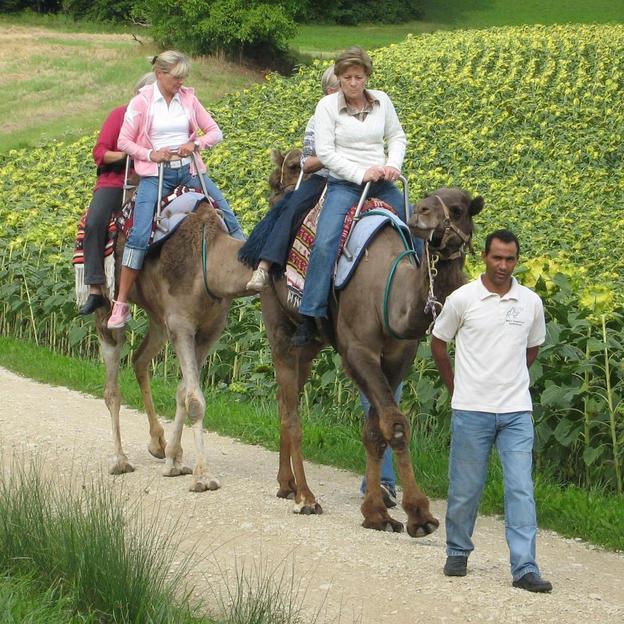 Firmen: Kamelreiten in Oberglatt