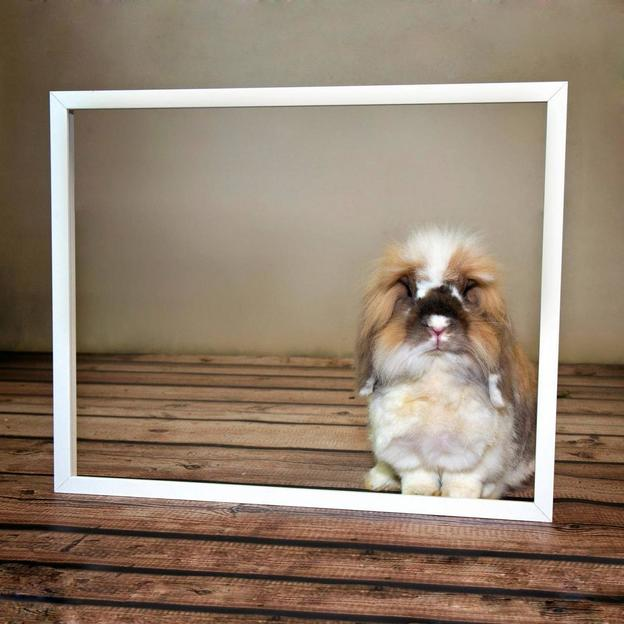 Ein tierisch gutes Fotoshooting