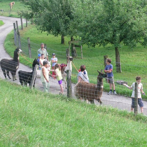 Family Lama Trekking in Huttwil