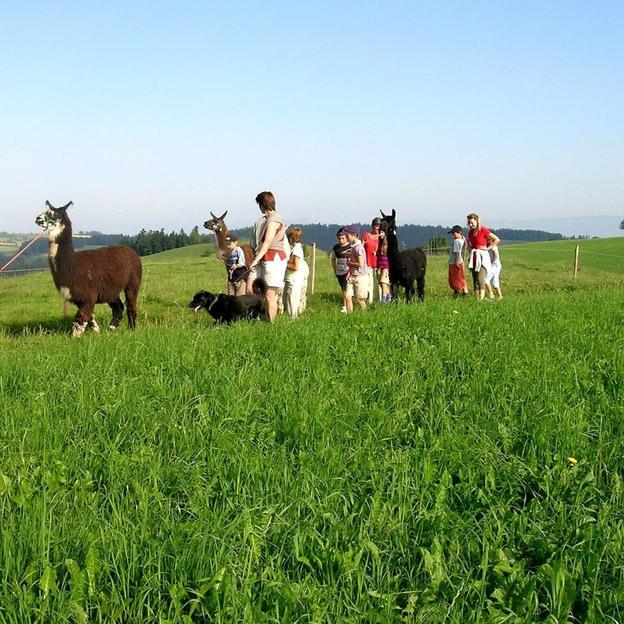 Randonnée famille avec les lamas à Huttwil