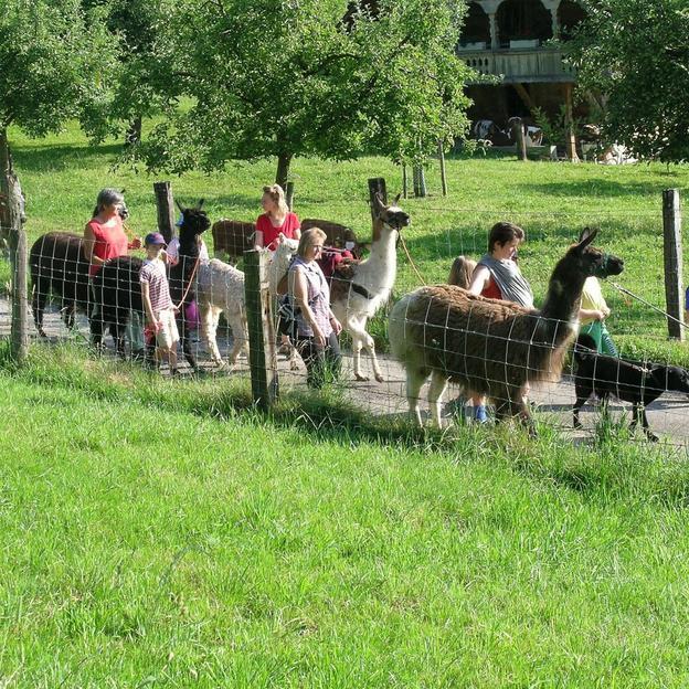 Family Lamawanderung in Huttwil