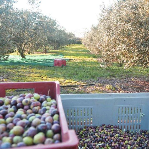 Übernachtung mit Golf & Olivenölverkostung