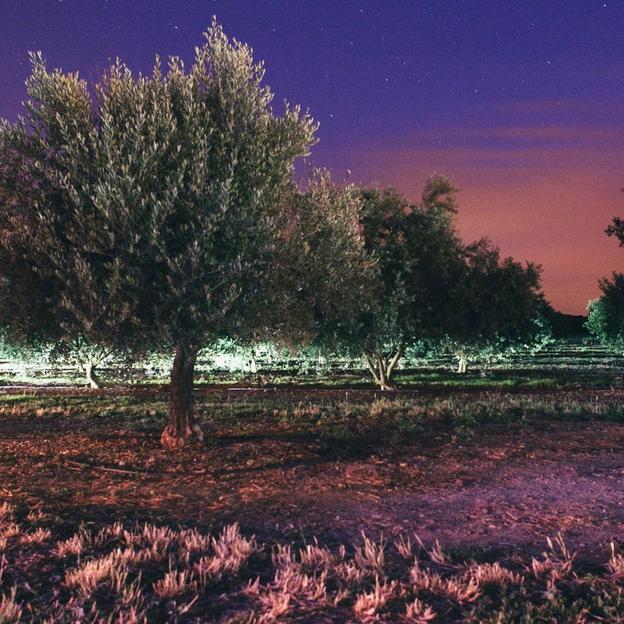 Aufenthalt und Olivenöl-Degustation in Südfrankreich