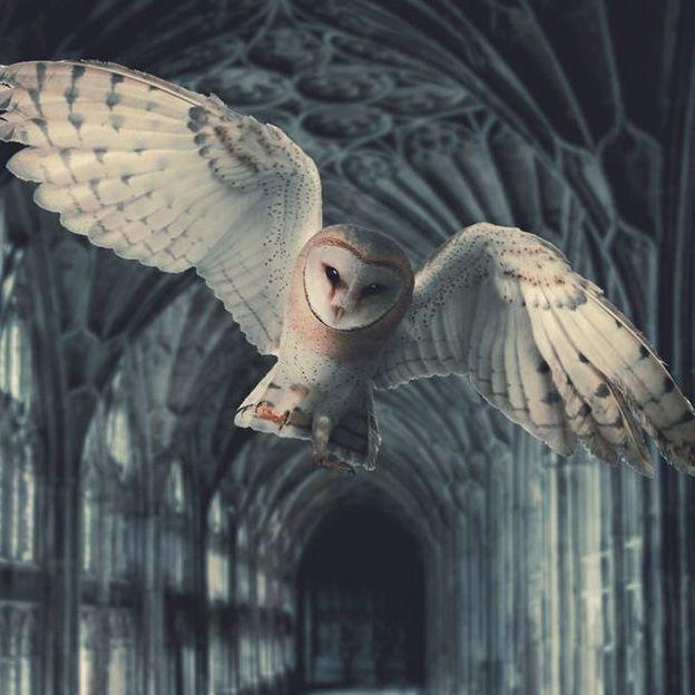 Harry Potter Erlebnisreise London