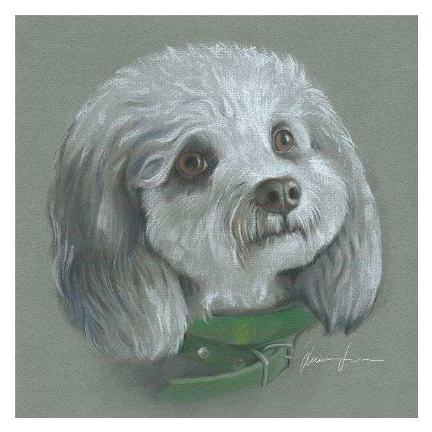 Handgezeichnete Haustier-Porträts