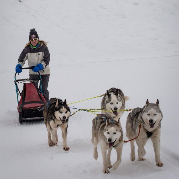 Husky Workshop in Tirol