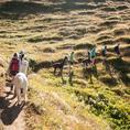 Alpaka Trekking auf Torrent (Erwachsene)