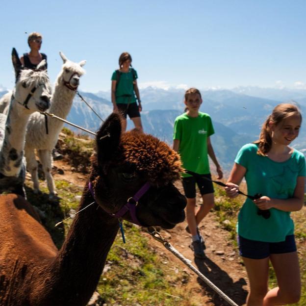 Trekking avec alpagas à Loèche-les-Bains (1 enfant)