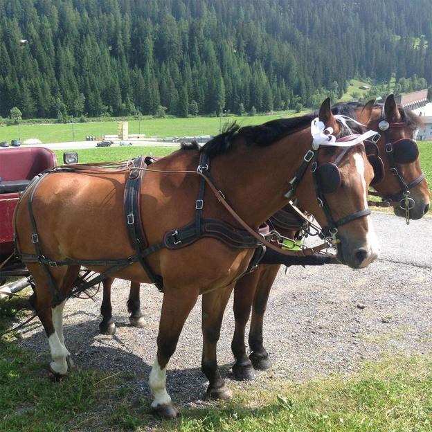 Kutschenfahrt in der Davoser Bergwelt (4 Personen)