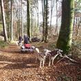 Exklusive Husky-Schlittenhunde Wagenfahrt im Herbst