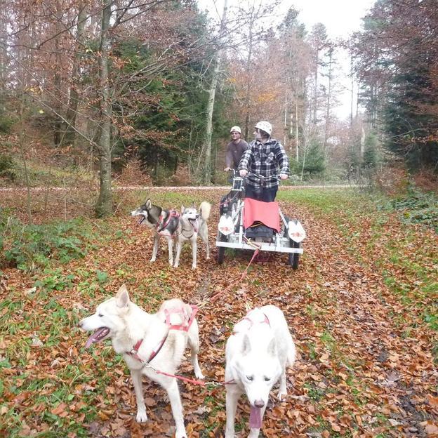 Balade exclusive avec des chiens de traîneau en automne