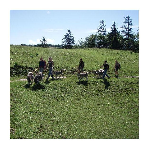 Husky-Trekking im Herbst für 1 Person