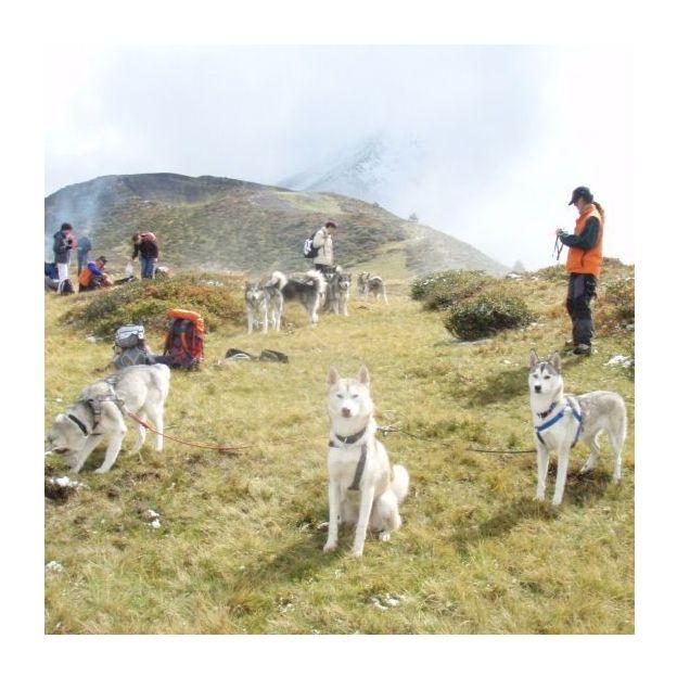 Husky-Trekking im Sommer für 1 Person