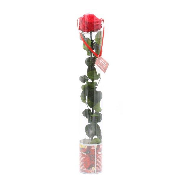 Rose à vie