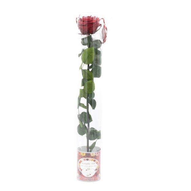 Rose à vie deluxe