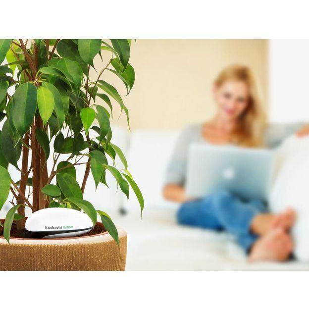 Koubachi Wi-Fi Pflanzensensor