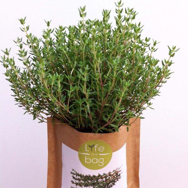 Kit Herbes aromatiques - Grow Bag